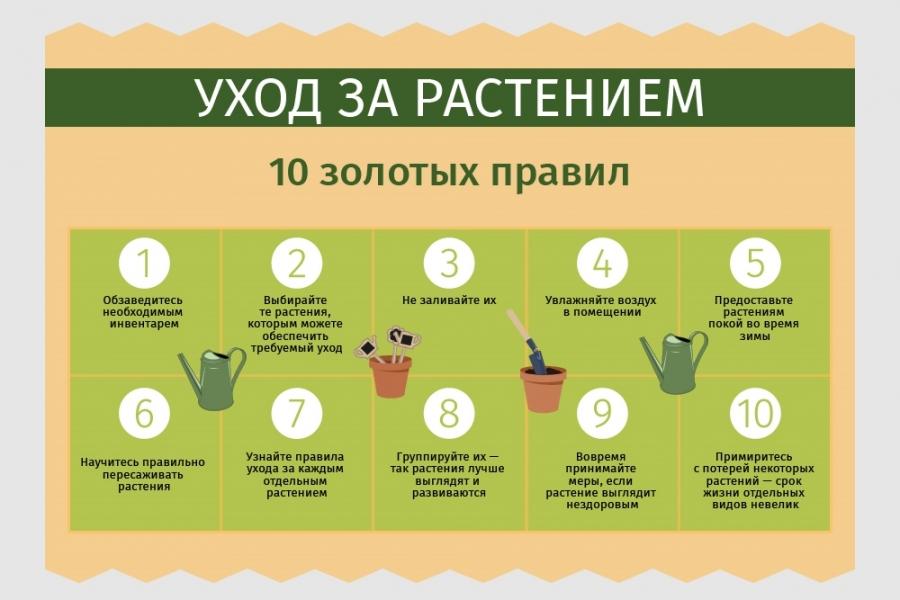 статьи о растениях из  газет и журналов F7f8c4727a011019fe43a7eaa92bf9a5_XL